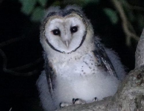 Augusta Margaret River is OWL FRIENDLY